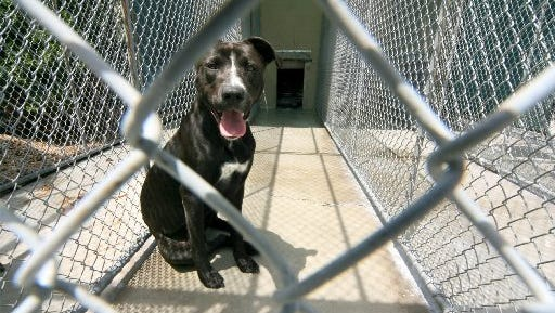 The state Legislature may pass legislation to prohibit local governments from banning pit bulls.