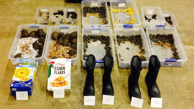 Turtles and other items seized from accused smuggler.
