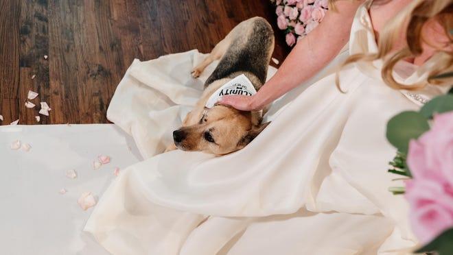 Tara Harper pets her dog at her wedding.