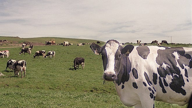 The Dairy Business Association filed a lawsuit against the DNR on July 31, saying legal action is necessary to stop DNR's ongoing efforts to skirt the formal rulemaking process.