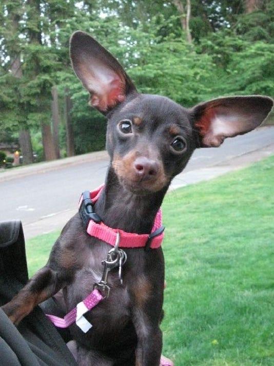 SAL0711-pet adopt