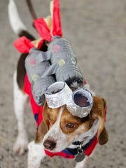 Stanley the Beagle takes the first place of the Alien