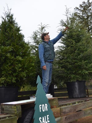 Joe Cox, owner of Scattered Acres Nursery in Maurice River Township, sells potted trees at the Route 47 location in Delmont.