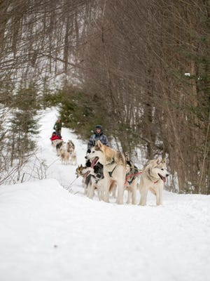 """Despite their majestic look and pure pulling power, the Huskies of Peace Pups don't likely dream of dogsledding biggest stage. """"I don't think any of my dogs have dreams of running the Iditarod,"""" Peace Pups owner Ken Haggett said. """"I think they like coming home to their nice warm dinner and snuggling into their beds at night. Or maybe that is just me."""""""