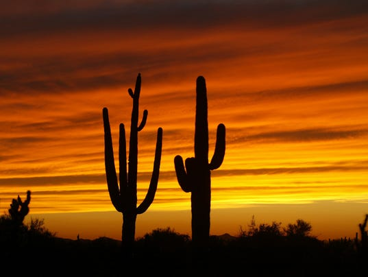 Sunset Saguaro