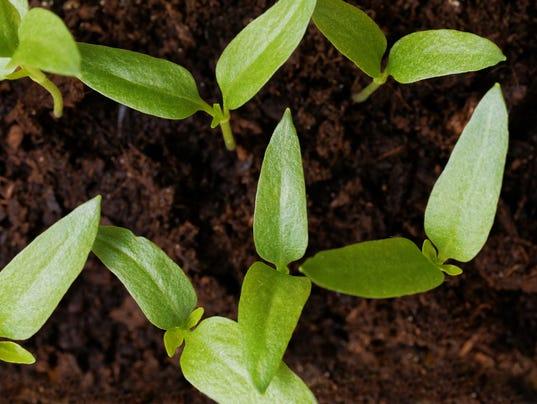 Yard & Garden: soils