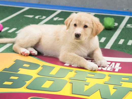 Get ready for puppy <i>awww-</i>verload! It may not be the most-watched show on Super Bowl Sunday, but it's certainly the most adorable. Meet the starting lineup of Animal Planet's 'Puppy Bowl IX' (Feb. 3, 3 ET/PT), and check out shots of the action. (Viewers who wish to adopt a pet in their area can visit petfinder.com, one of Puppy Bowl's sponsors.)