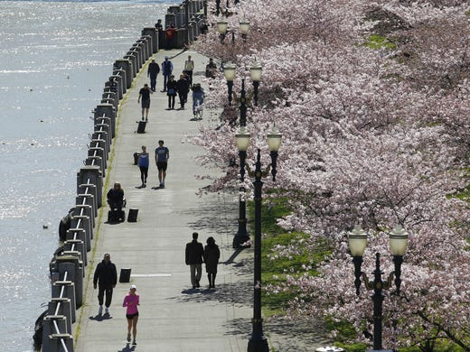 People walk along Tom McCall Waterfront Park as cherry trees blossom near the bank of the Willamette River in Portland, Ore. The city ranks seventh for the top park systems in the nation.
