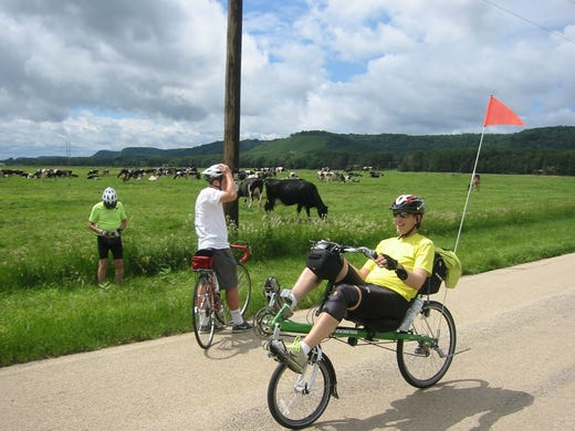 A biker participating in the 28th Great Annual Bicycle Adventure Along the Wisconsin River, or GRABAAWR,rides past a field where others have stopped to try to talk to the cows.