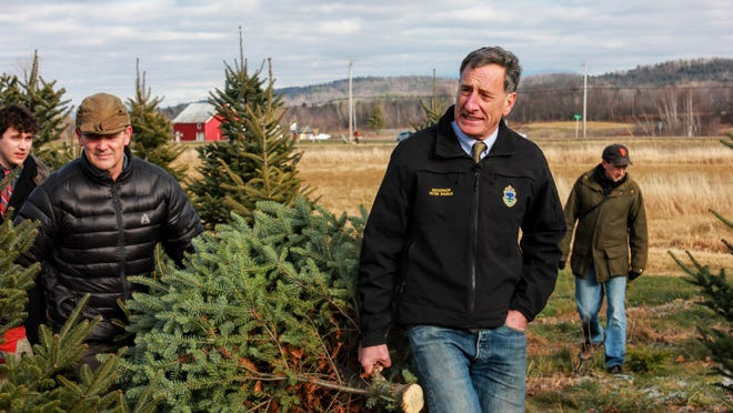 Gov. Peter Shumlin removes a Christmas tree from Isham Family Farm in Williston on Monday. Vermont is home to 288 tree farms, according to U.S. Department of Agriculture statistics cited by the governor's office.