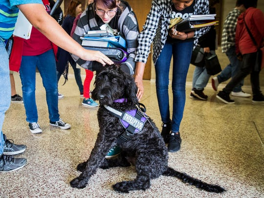 Kids stop during pass period to pet Merlin, the new