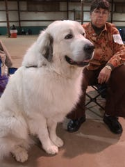 Obedience Club of Wichita Falls Obedience Trials at the Bridwell Center.