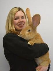 A bunny named Atlas.