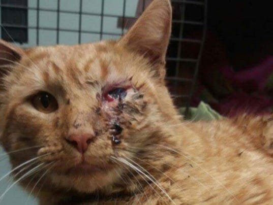 a personal story about the beloved pet A dad has described his family's horror after their beloved pet was shot in the face by a suspected maghull 'cat serial killer'  derek hatton degsy's verdict on the stories making the news it.
