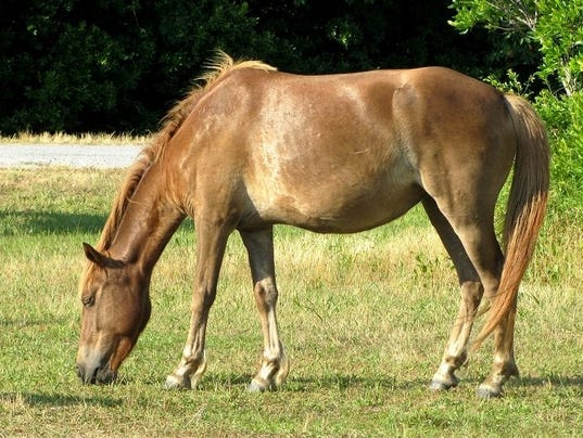 636365133325917238-dead-horse.jpg