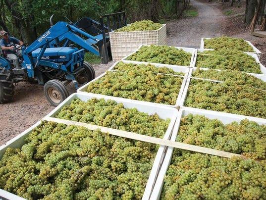 636580291553380768-Biltmore-grapes-in-bins.jpg
