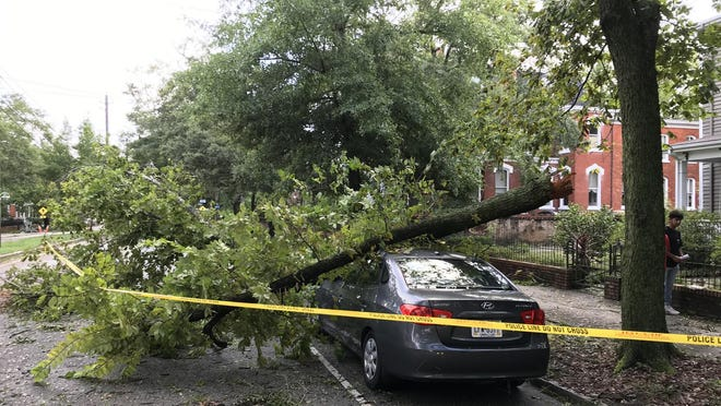 A tree limb fell on a car parked on South Third Street between Nun and Anne streets in downtown Wilmington.