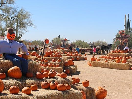 Leftover pumpkins at MacDonald's Ranch in Scottsdale