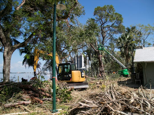 Tree trimmers cut down an Australian pine tree damaged by Hurricane Irma at the Edison & Ford Winter Estates on Wednesday.