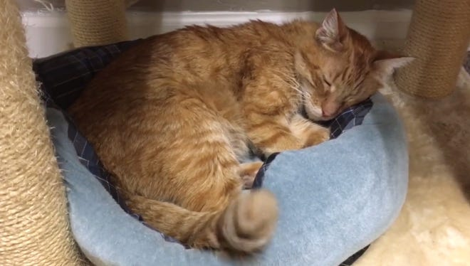 A cat sleeps at Safe Haven Pet Sanctuary in De Pere.