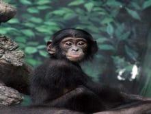 Zoo Babies!