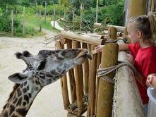 Come for Cincinnati Zoo, Stay for Tarzan