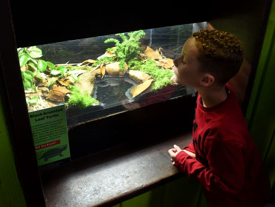 Tatem Cain, 6, from Morristown, takes a look at a black-breasted
