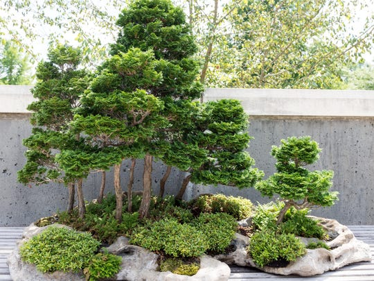 The 24th annual Bonsai Expo is Oct. 12-13 at NC Arboretum.