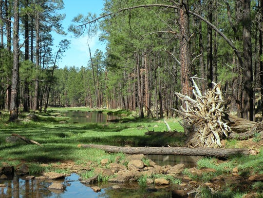 The Springs Trail near Pinetop-Lakeside is part of