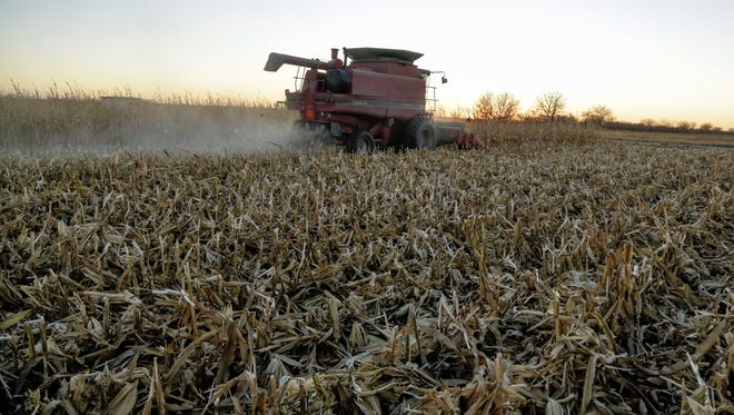 A combine harvests corn near Schyler, NE, on Nov. 30. Some eastern Nebraska farmers report the value of their crop dropped roughly $19,000 an acre overnight in late October.