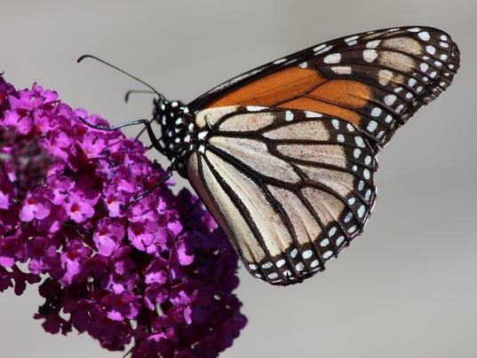 DFP 0624_butterfly_pix