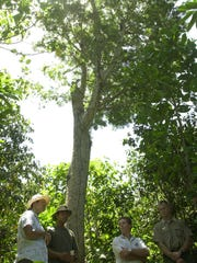 The Rotary Club of Northern Guam presented a check to the University of Guam to help re-propagate the serianthes nelsonii, the large tree in the background, into its natural habitat. The name of the tree in Chamorro is hayun lågu. The tree is on Andersen property.
