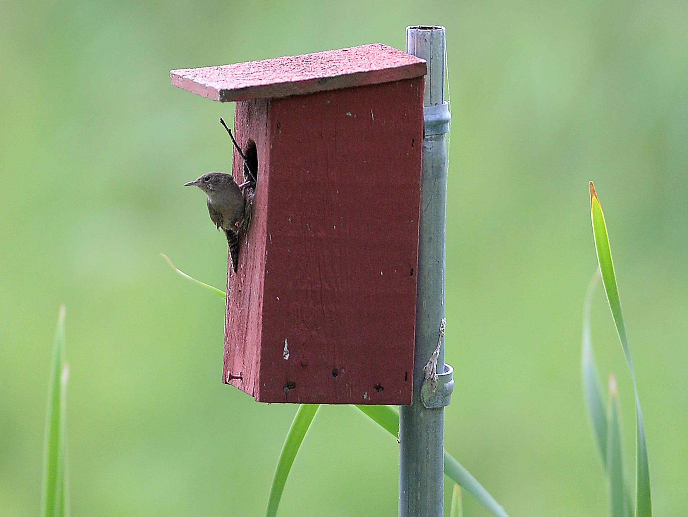 With so many native plants on the property, birds and