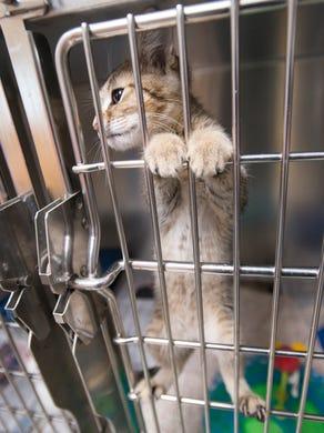 Dogs for Adoption Near Santa Rosa, CA | Petfinder
