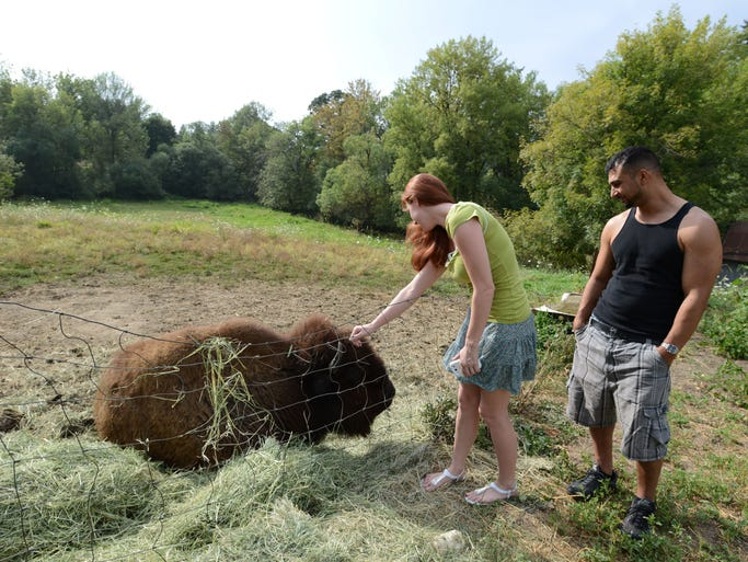 Jessica Reed and Mohamed Tabib stop to pet and take pictures of Helen Keller, a 14-year-old blind American bison, that lives in NE Salem on Monday, Aug. 11, 2014. Neighbors say passersby often stop to get a closer glimpse at Helen.