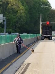 Trooper Charles Lanfranchi of the Virginia State Police walks a dog found running loose after a bee truck crashed on I-495 near D.C.