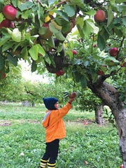 The Apple Farm in Victor.