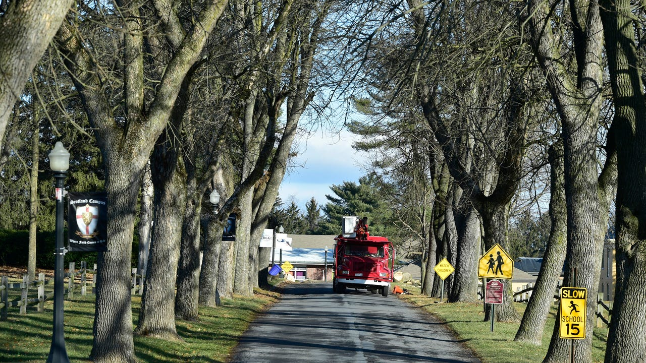 Ash trees at Scotland Campus were removed after disease affected many of the trees near the Scotland Road entrance.