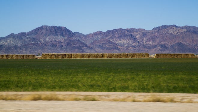 The Colorado River Indian Tribes use their Colorado River water allotment to irrigate alfalfa and cotton fields on their land. The tribes are considering improving the efficiency of that irrigation and sharing some of their water with the rest of the state.