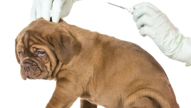 Get your dog (or cat) a shot at Dr. Flake's clinic.