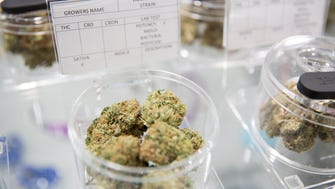 A variety of marijuana flowers is seen on display at the NoHo Compassionate Caregivers in Los Angeles, California on Monday, April 16, 2018.