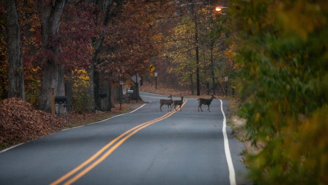 Deer crossing roads pose problems for motorists.