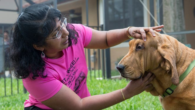Dr. Lenna Plavumkal, the veterinarian who runs Vet On Wheels, a mobile veterinary clinic, checks the eyes of Kate in the backyard of the Worley family's home on Thursday, June 8, 2017, in Fort Meyers, Fla. The Worley family rescued Kate, who is a 4-year-old bloodhound. Bree Worley said it is challenging to take Kate to the vet because of her weight and her stubborn personality, so Vet on Wheels was the best fit for their dog's needs.