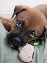 Your canine friends are perfectly welcome at the Michigan Animal Rescue League's Yappy Hour.