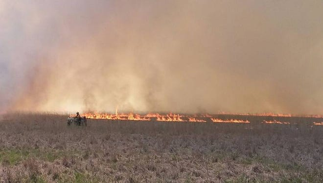 DNR workers monitor a controlled burn to eliminate non-native trees and brush in the Dewey's Pasture Bird Conservation Area.