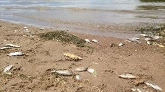 A University of Minnesota study estimated that 500 fish die-offs happen each year in Minnesota.
