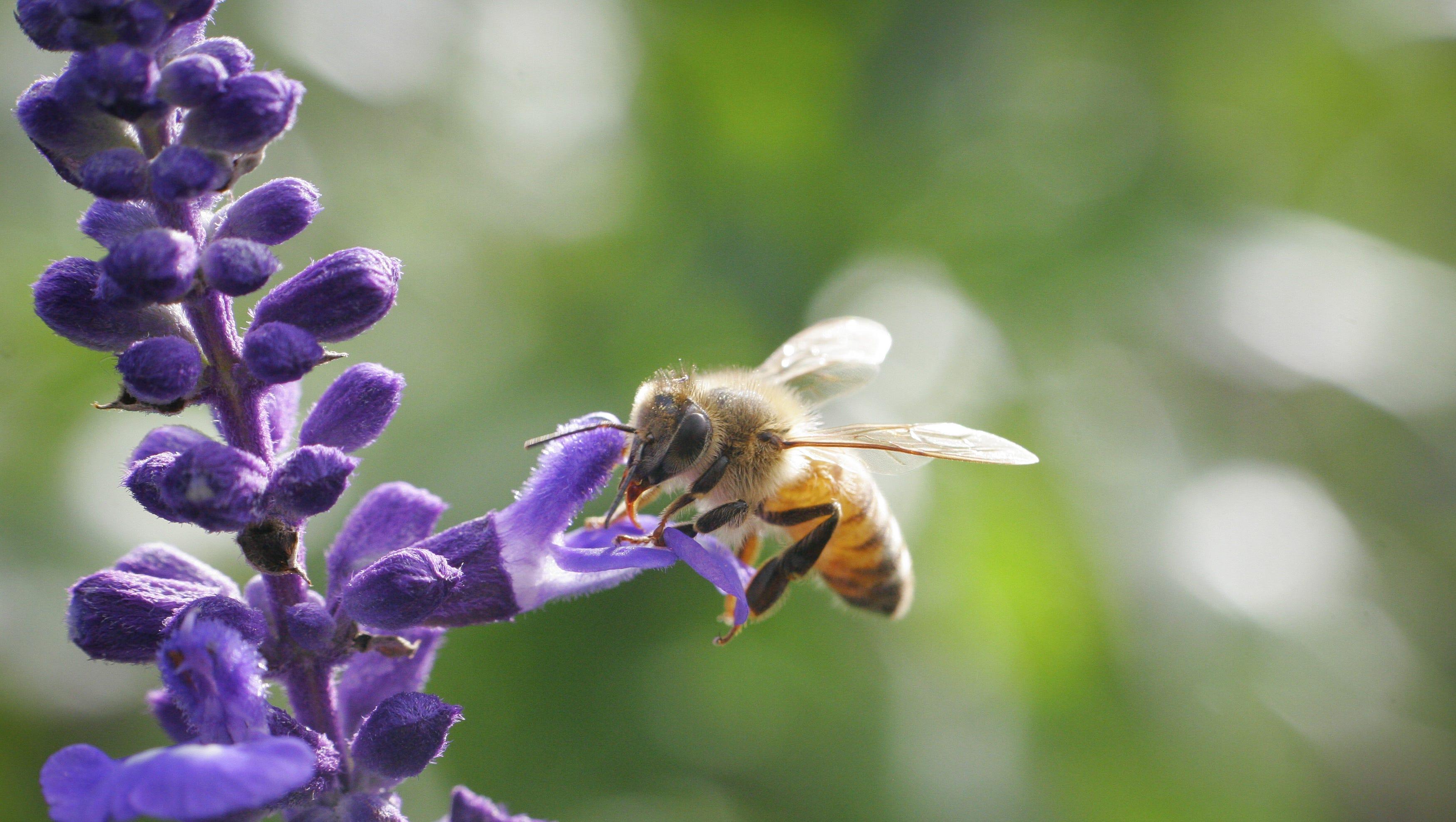 Dvoboj slika  - Page 25 635938339093727386-honeybee