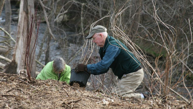 Volunteers from various environmental and government agencies came out Saturday morning to plant shrubs along the banks and hillsides of Dry Run Creek by the Norfork Dam.