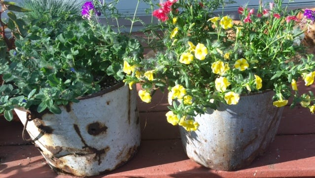 The popular Plant Yo Junk classes are back at Mayflower Greenhouse this month. The more creative the planter the better.