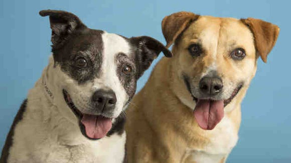 Carrots and peas. Peanut butter and jelly. Tyson and Panda. Some things just go together and Tyson and Panda, two nine-year-old Shepherd mixes.
